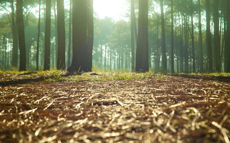 Planting Trees Farr & Farr June 2021 - new (4)